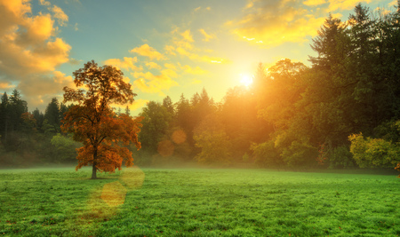 Beautiful golden colored autumn tree in meadow. Outdoor photography in sunrise light