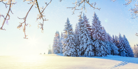 Beautiful snowy landscape panorama with forest on background. Fresh powder snow, winter nature
