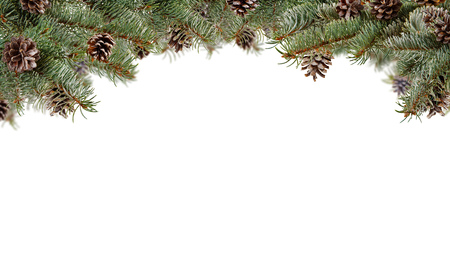 Fir branches with cones, isolated on white background. Copyspace for text