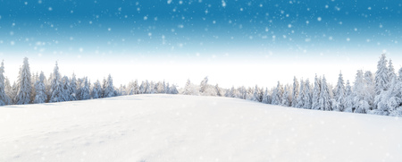 Winter panoramic landscape with forest on background. Beautiful and idillic winter or Christmas background in high resolution Reklamní fotografie