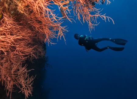 Jonge mensenscuba-duiker die koraalrif, onderwateractiviteiten onderzoeken