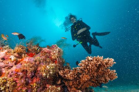 Jonge vrouwenscuba-duiker die koraalrif, onderwateractiviteiten onderzoekt