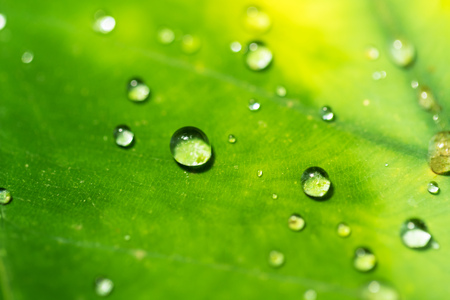 Beautiful detail of leaf with water drops, macro photo. Low depth of focus 스톡 콘텐츠