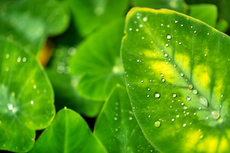 Beautiful detail of leaf with water drops, macro photo. Low depth of focus 版權商用圖片