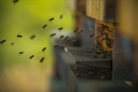 A flock of bees flying into hive, low depth of focus.