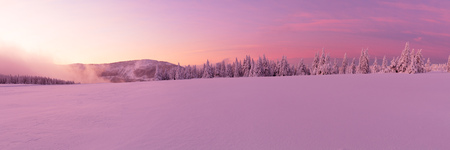 Panoramic idyllic winter landscape with spruce trees and snowy meadow. High resolution image