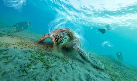 Onderwaterconcept van wereldwijd probleem met plastic afval dat in de oceanen drijft. Karetschildpad in bijschrift van plastic zak Stockfoto