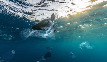 Underwater concept of global problem with plastic rubbish floating in the oceans. Hawksbill turtle in caption of plastic bag Stock Photo