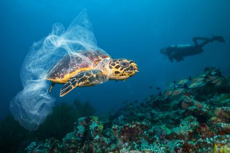 Unterwasserkonzept des globalen Problems mit Plastikmüll, der in den Ozeanen schwimmt. Karettschildkröte in der Beschriftung der Plastiktüte