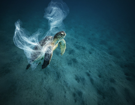 Underwater concept of global problem with plastic rubbish floating in the oceans. Hawksbill turtle in caption of plastic bag Banco de Imagens