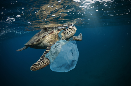 Underwater concept of global problem with plastic rubbish floating in the oceans. Hawksbill turtle in caption of plastic bag Standard-Bild