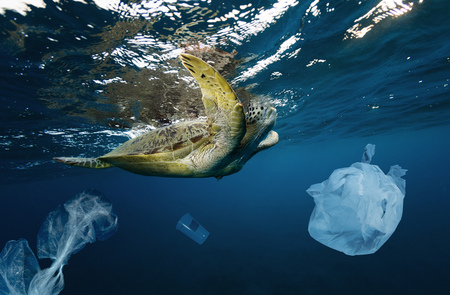 Underwater concept of global problem with plastic rubbish floating in the oceans. Hawksbill turtle in caption of plastic bag Фото со стока