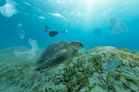 Unterwasserkonzept des globalen Problems mit Plastikmüll, der in den Ozeanen schwimmt. Karettschildkröte in der Beschriftung der Plastiktüte Standard-Bild