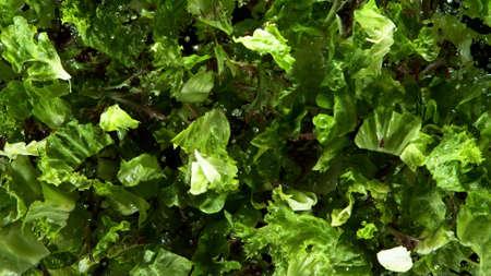 Freeze motion of flying fresh lettuce mix, isolated on black background
