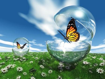 exotic butterflies: mariposa en una burbuja en el prado Foto de archivo