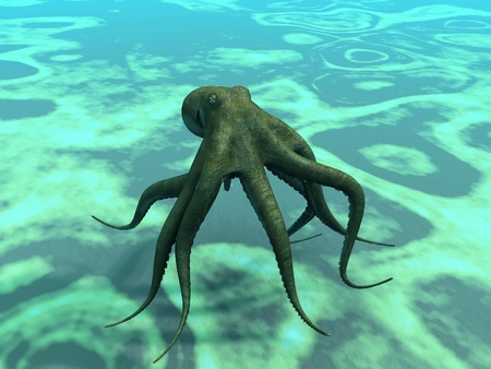 cephalopod: octopus  at the bottom of the sea