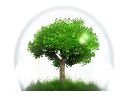 proteccion: un árbol verde en una burbuja transparente