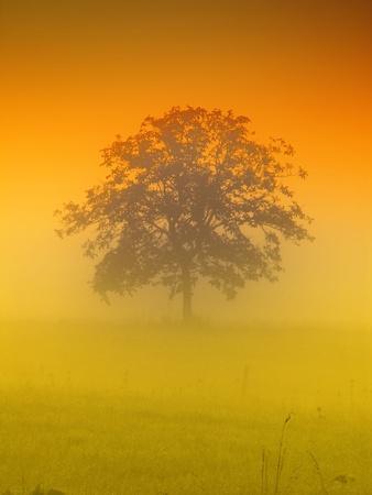 autumn scene: the tree in the morning Stock Photo