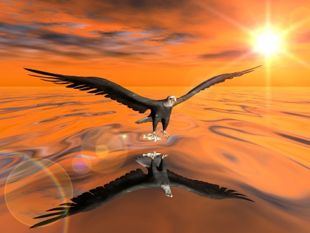the eagle flies over the water photo