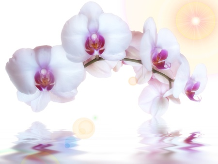 orchids and reflection in the water Stock Photo - 10760506