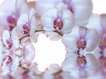 orchids and reflection in the water photo