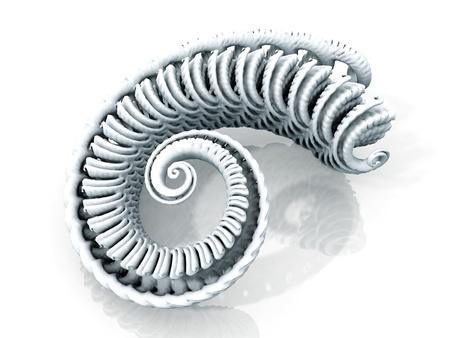 molluscs: the spiral of the mollusc