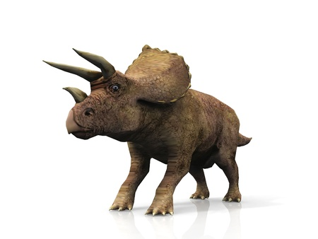 prehistoria: Triceratops sobre un fondo blanco