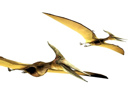 pterodactyls  on a white background photo