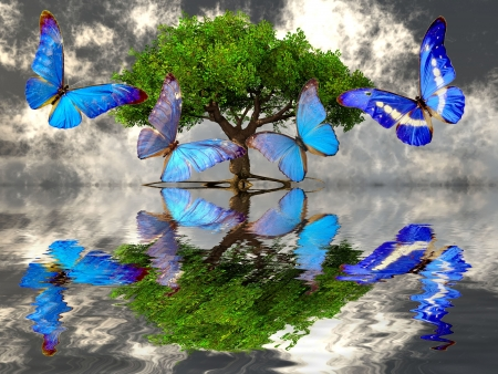 아름 다운 나비와 나무
