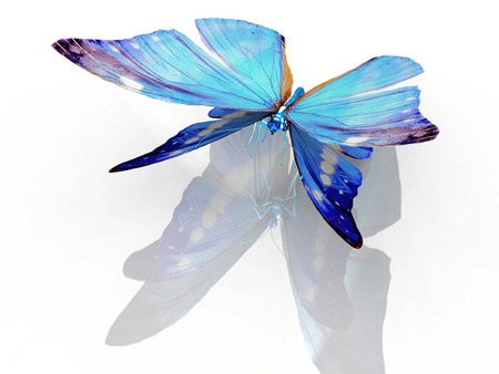 the beautiful butterfly with wings Stock Photo - 10882650