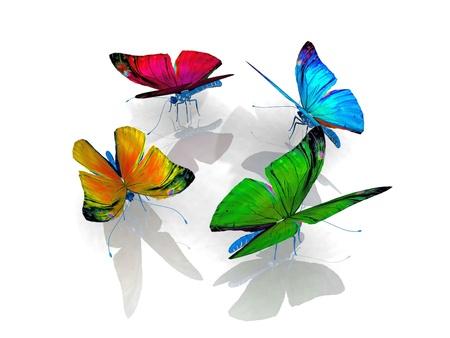 exotic butterflies: la hermosa mariposa con alas
