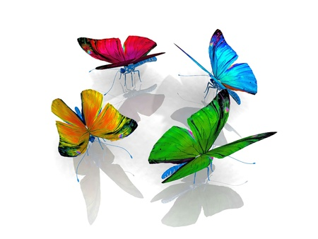 the beautiful butterfly with wings photo
