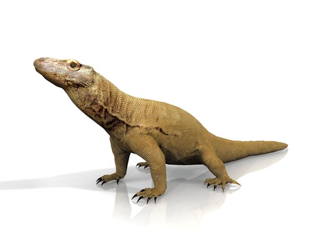 the  Komodo dragon on a white background