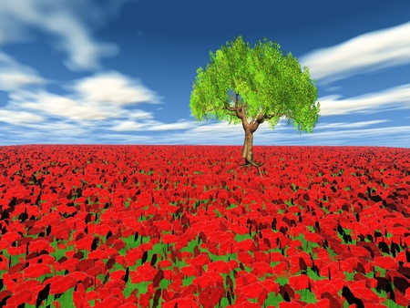 poppy field and the tree