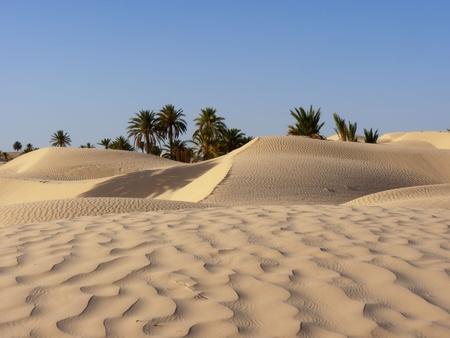 사막에서 모래 언덕과 야자수