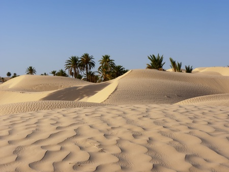 sand dune and palm tree in the desert Stock Photo