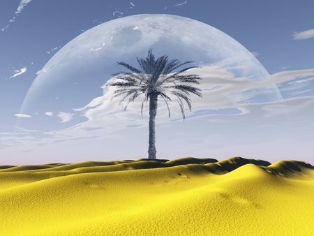 the  palm tree in the desert photo