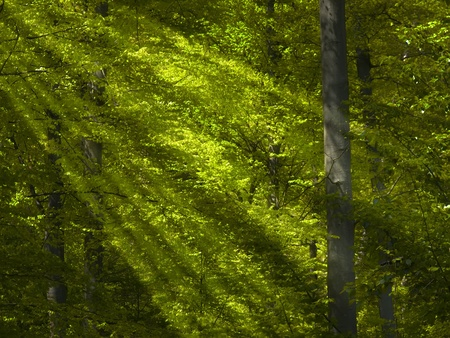 lightbeam: the forest and the light beams