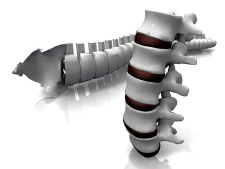脊椎と脊椎骨 写真素材