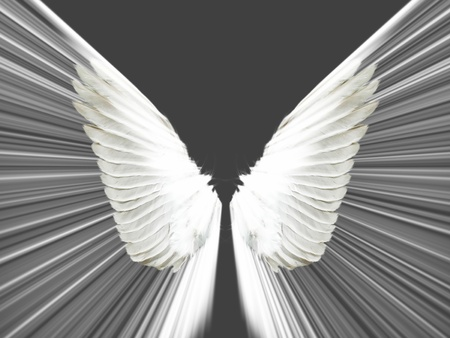 the wings on a black background photo