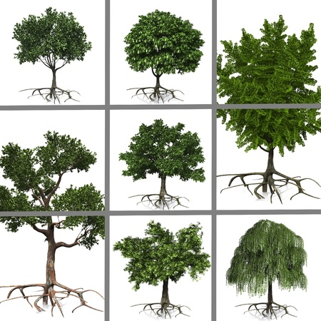 compositing of trees on white background Stock Photo - 10974637
