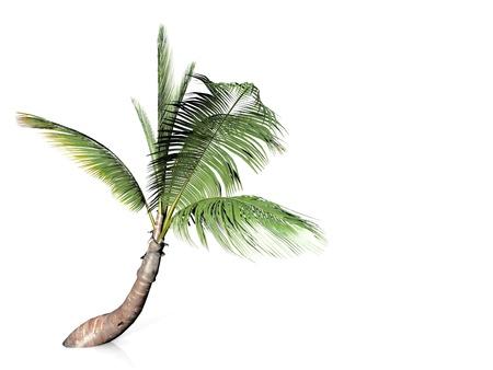 palmy na białym tle