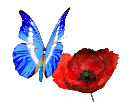 the beautiful butterfly and poppy Stock Photo - 10974616