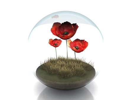 poppy field: red poppys in a bubble