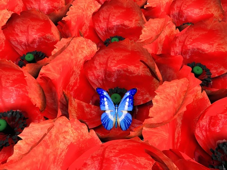 the butterfly and poppys Stock Photo - 10974640
