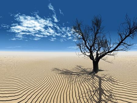 the dead tree in the desert Standard-Bild
