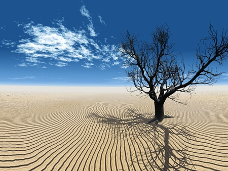 the dead tree in the desert Stock Photo