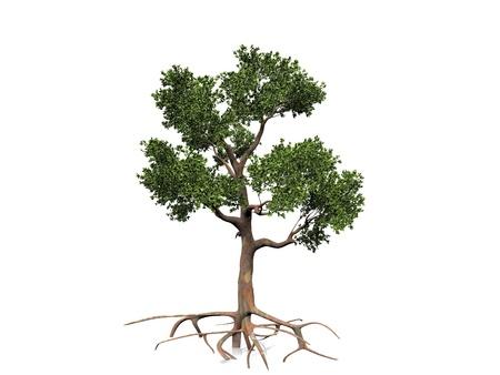 eucalyptus  on a white background photo