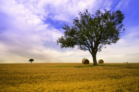 hay field: straw ball and a green tree in a field Stock Photo