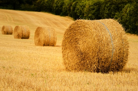 four straw bale in a field photo